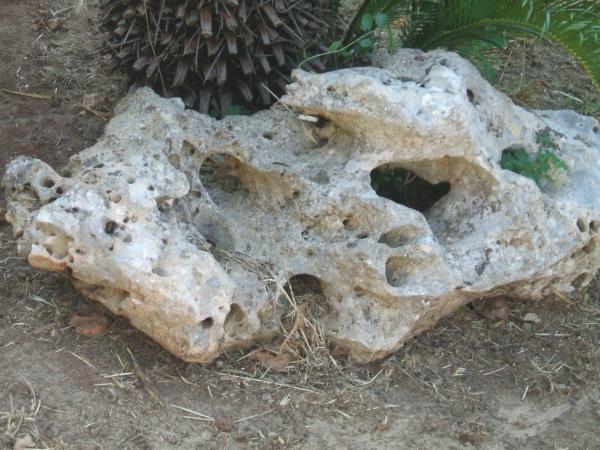 Sassi bucati ulivi secolari piante e giardini import for Sassi finti per giardini